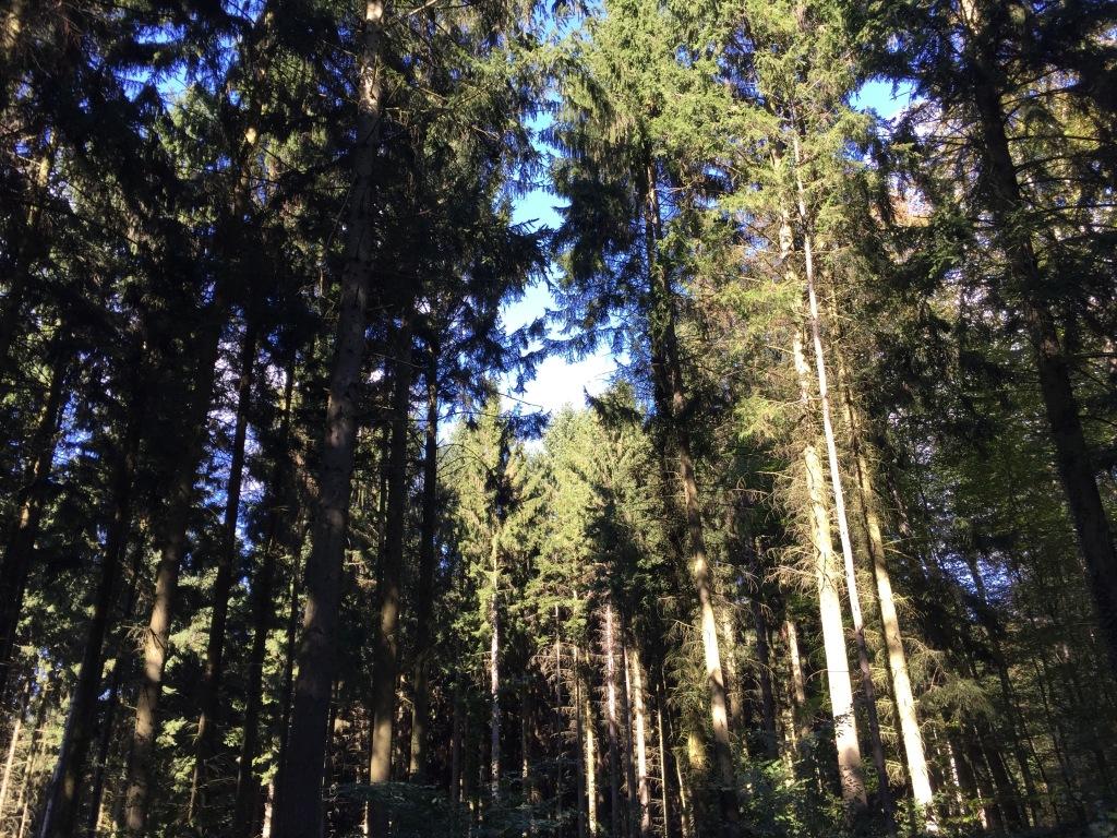 圖六:途中樹林